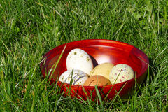 Easter Eggs. Painted easter eggs in a wooden bowl on the green grass background Stock Image