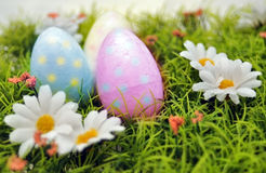 Easter eggs. Three colored easter eggs with daisies royalty free stock photo