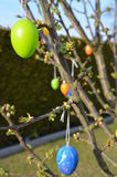 Easter Eggs. A lot of  on a tree Stock Photos