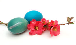Easter eggs. Picurfe of easter eggs on a white Stock Image