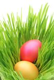 Easter Eggs. With green grass Stock Photos