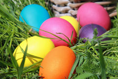 Easter Eggs. Colorful eggs lying on the grass on a sunny day Easter Stock Image
