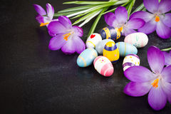 Easter eggs. And crocuses on black background Stock Image