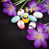Easter eggs. And crocuses on black background Royalty Free Stock Photography