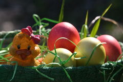 Easter eggs. Easter eggs and toy chicken in the basket Royalty Free Stock Photo