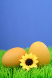 Easter eggs. On grass royalty free stock photos