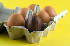 Easter Eggs. Chocolate easter egg in a box of eggs Royalty Free Stock Image