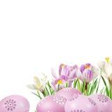 Easter eggs aad crocuses Royalty Free Stock Image