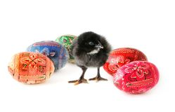 Easter eggs and baby chicken Royalty Free Stock Photography