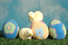 Easter eggs and baby chicks on the grass Royalty Free Stock Photos