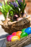 Easter eggs with basket Royalty Free Stock Photos