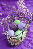 Easter eggs in basket. Violet, purple and green easter eggs with spring flowers Royalty Free Stock Photo