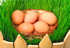 Easter eggs in the basket against the green grass Stock Image