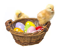 Easter eggs in a basket and chickens Stock Images