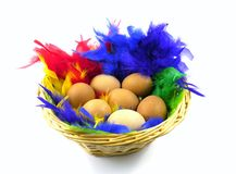 Easter eggs in a basket with colorful feathers. Easter boiled chicken eggs in a basket with feathers in many colors royalty free stock image