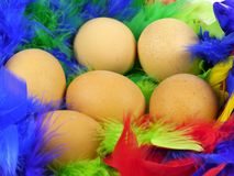 Easter eggs in a basket with colorful feathers. Easter boiled chicken eggs in a basket with feathers in many colors stock images
