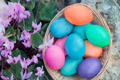 Easter eggs basket with Cyclamen flowers Stock Image