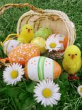 Easter eggs in basket with daisies and chickens Royalty Free Stock Image