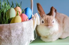 Easter eggs in basket with grass and rabbit stock photo
