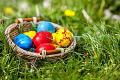 Easter eggs in basket on green grass. Stock Image