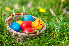 Easter eggs in basket on green grass Royalty Free Stock Photos