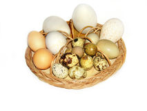 Easter eggs  in basket  isolated on white Royalty Free Stock Photos