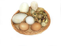 Easter eggs  in basket  isolated on white Stock Photos