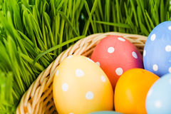 Easter eggs in basket Stock Images