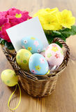 Easter eggs in a basket with notice paper copy space. Primula flowers in background stock image