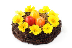 Easter eggs in basket with primula flower heads. Stock Photo