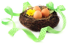 Easter eggs in basket with primula flower heads. ribbon around Royalty Free Stock Image