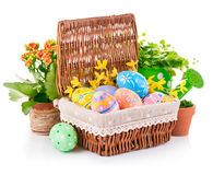 Easter eggs in basket with spring flowers and green leaves Royalty Free Stock Photos