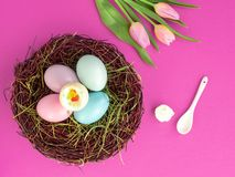 Easter eggs in a basket and tulips on a pink background stock image