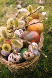 Easter eggs in the basket. Easter eggs in basket with twig of willow Royalty Free Stock Photos