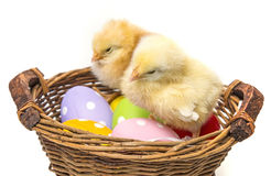 Easter eggs in a basket and two chickens Stock Photo