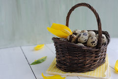 Easter  eggs in the basket and yellow tulips on painted background Royalty Free Stock Image
