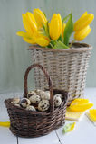 Easter eggs in the basket and yellow tulips on painted background Royalty Free Stock Photography