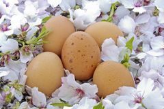 Easter eggs on a bed of bloom in springtime Stock Images