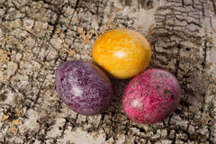 Easter eggs. On the birch bark Royalty Free Stock Images