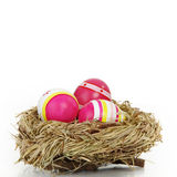 Easter eggs in a bird nest Stock Image