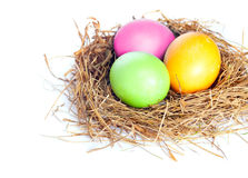 Easter eggs in bird nest. Close up of Easter eggs in bird nest on white background with soft shadow Stock Photography