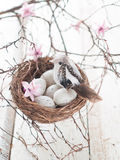 Easter eggs and bird Royalty Free Stock Photography
