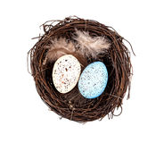 Easter eggs in birds nest Stock Photos