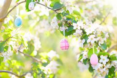 Easter eggs on blooming cherry tree. Royalty Free Stock Photos