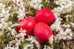 Easter Eggs on Blossom Stock Photography