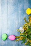 Easter eggs with branch mimosa spring yellow Stock Photography