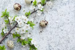 Easter eggs with branch of spring cherry blossom stock photography