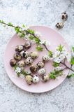 Easter eggs with branch of spring cherry blossom royalty free stock photos