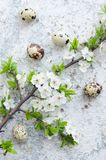 Easter eggs with branch of spring cherry blossom royalty free stock image