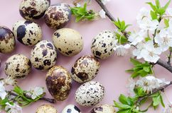 Easter eggs with branch of spring cherry blossom stock photo
